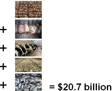 Cruelty Costs Graphic